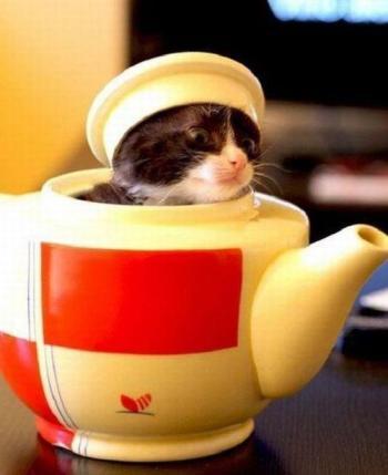 Kitten Teapot