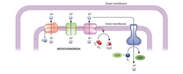 u3cp4-2_respiratorychainco_ksm_1_2